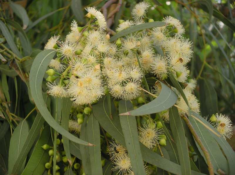 перепелиный помет как удобрение для комнатных растений
